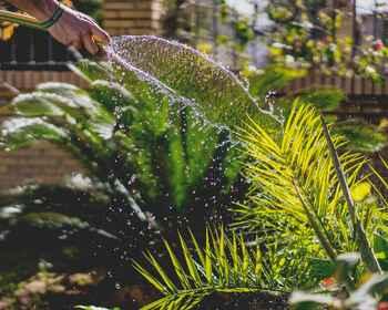 Summer garden survival guide