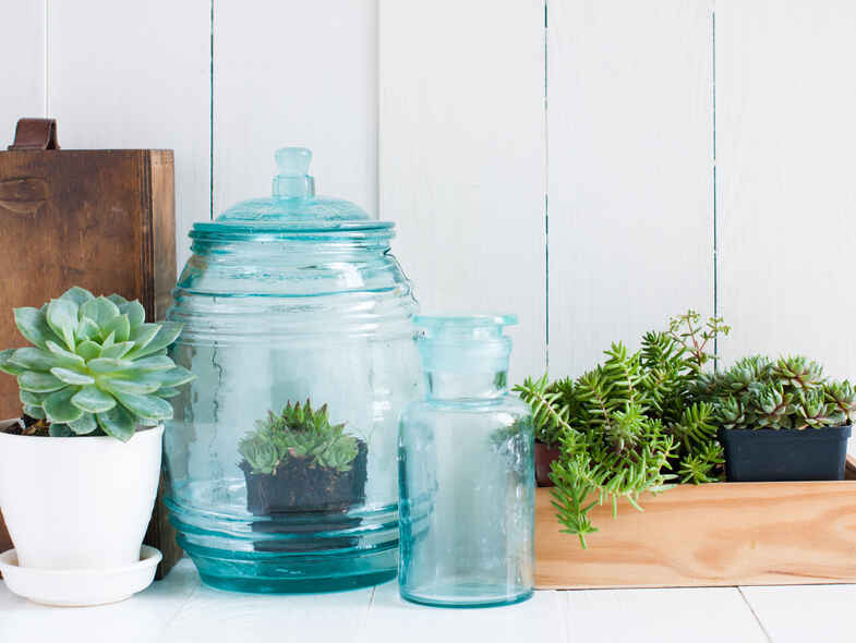 Planting Indoors to a Happy and Healthier Life